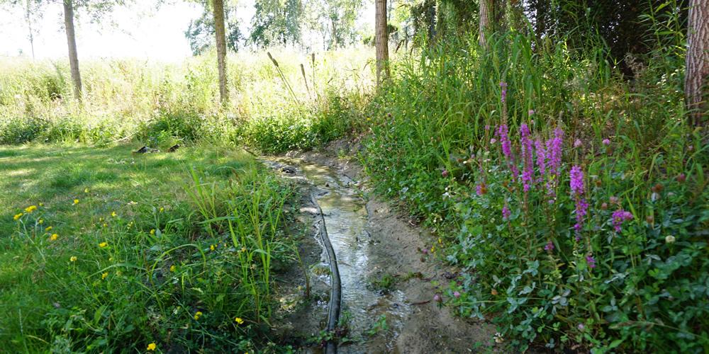 Particuliere tuin - Diepenbeek 02 1000x500