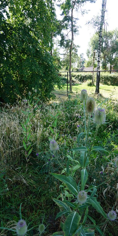 Particuliere tuin - Diepenbeek 03 500x1000