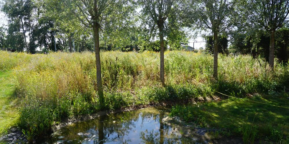 Particuliere tuin - Diepenbeek 04 1000x500