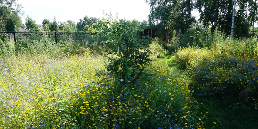 Particuliere tuin - Diepenbeek 05 1000x500