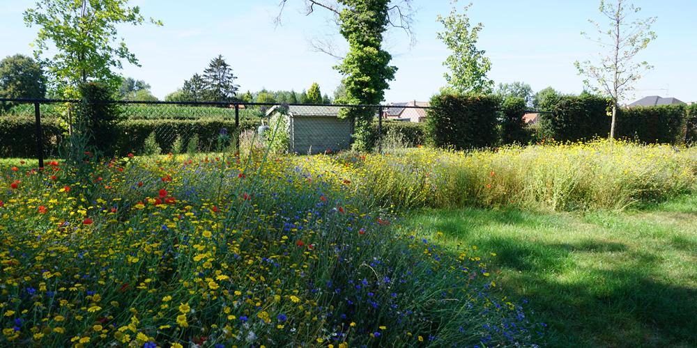 Particuliere tuin - Diepenbeek 06 1000x500