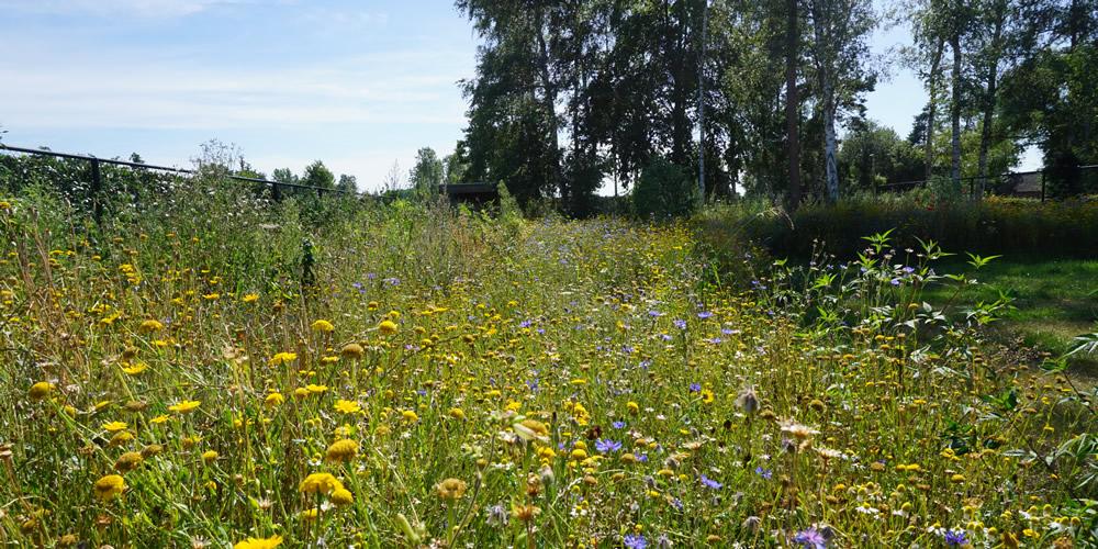 Particuliere tuin - Diepenbeek 07 1000x500